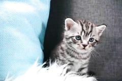 Le chaton jette un coup d'oeil au coin de la rue Photo stock