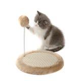 Le chaton l'affilant griffe Image stock