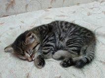 Le chaton mignon doux dort Image libre de droits