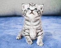 le chaton mignon se repose Photographie stock libre de droits