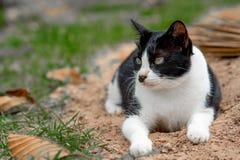 Le chaton noir et blanc mignon se trouve au sol en parc photographie stock libre de droits