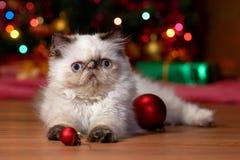 Le chaton persan drôle joue avec des boules de Noël image stock