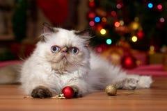 Le chaton persan mignon joue avec des boules de Noël photo stock