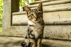 Le chaton rayé gris roux se repose dans la cour Image libre de droits
