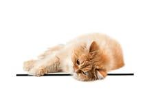 Le chaton rouge s'étend sur le verre et regarder directement dans l'avant photo stock