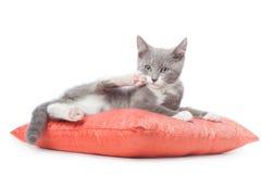 Le chaton s'étend sur l'oreiller. Image stock
