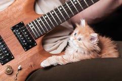 Le chaton s'étend sur ses genoux sur le fond de la guitare photographie stock