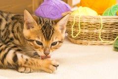 Le chaton se lave la patte avec la langue dans la perspective des boules de laine Photo libre de droits