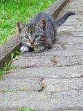 Le chaton tobby femelle dispose à sauter tout en jouant avec une lame d'herbe sèche photographie stock