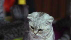 Le chaton tourne sa tête et clignote banque de vidéos