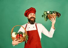 Le chef tient le chou, le radis, le brocoli avec de la laitue et l'ail photos libres de droits