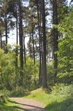 Le chemin à travers la forêt Images libres de droits