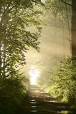 Le chemin à travers la forêt de source avec le soleil de matin rayonne Image libre de droits