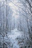 Le chemin à travers le parc d'hiver Image stock