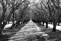 Le chemin Photo libre de droits