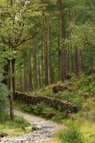 Le chemin courbe dans le bas bois de comment, secteur de lac, Cumbria photographie stock libre de droits
