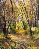 Le chemin d'enroulement à travers la forêt avec le jaune part de tapisser la traînée Photographie stock