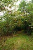 Le chemin dans l'ombre des arbres forestiers est enfermé par une petite barrière photo libre de droits