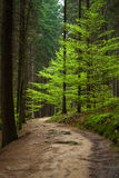 Le chemin dans la forêt photo stock