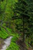 Le chemin dans la forêt photographie stock