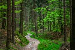 Le chemin dans la forêt photographie stock libre de droits