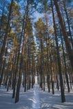 Le chemin dans la forêt d'hiver images stock
