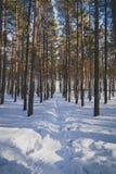 Le chemin dans la forêt d'hiver image stock