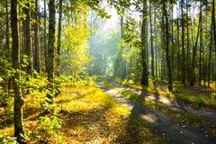 Le chemin dans la forêt, Pologne Photographie stock
