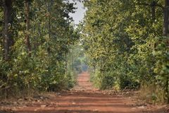 Le chemin dans la jungle photographie stock
