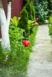 Le chemin dans le jardin Photo stock
