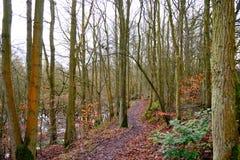 Le chemin dans les bois. Image stock