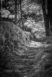 Le chemin dans les bois Image stock