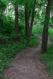 Le chemin dans les bois Images libres de droits