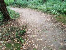Le chemin? de l'amour - pieds formés avec des coeurs Images libres de droits