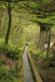 Le chemin de l'eau en bois images libres de droits