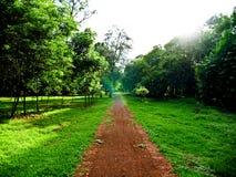 Le chemin de la nature et du temps Photo stock