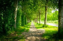 Le chemin de la nature ombrag?e photo libre de droits