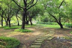 Le chemin de promenade de méandre en parc Photos stock