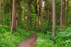 Le chemin de terre entre profondément dans la forêt photo libre de droits