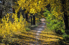 Le chemin en parc automnal Photo libre de droits