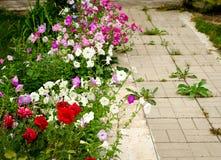 Le chemin en pierre dans le jardin a flanqué avec les fleurs colorées Photos libres de droits