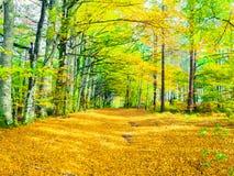 Le chemin entre les arbres dans la forêt d'automne photo stock