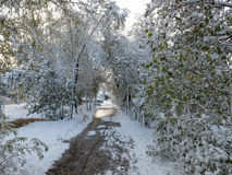 Le chemin entre les arbres dans la neige Photo stock