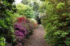 Le chemin entre les buissons et les fleurs Photographie stock