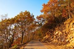 Le chemin et le coucher du soleil paisibles d'arbres d'automne de la montagne de Zu Image stock