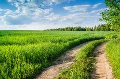 Le chemin forestier dans un domaine vert Photo libre de droits