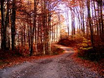 Le chemin forestier rouge Image libre de droits