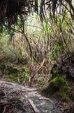 Le chemin pour monter Sibayak Photo libre de droits