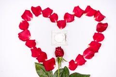 Le cher amour, les roses, occasions spéciales, avec des préservatifs, a isolé le fond Photo libre de droits