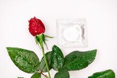 Le cher amour, les roses, occasions spéciales, avec des préservatifs, a isolé le fond Images libres de droits